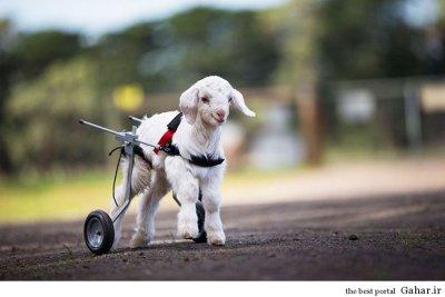 حمایت از حیوانات در استرالیا