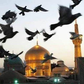 رسیدی به موکب امام رضا (ع) یادم کن...